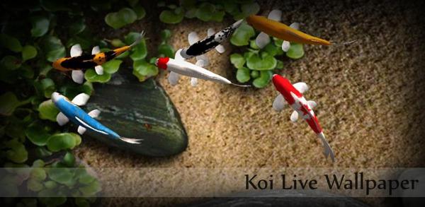 Koi Free Live Wallpaper, anima el escritorio de tu dispositivo Android con este estanque de carpas