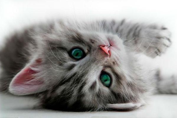 Estas son las mejores aplicaciones para los amantes de los gatos