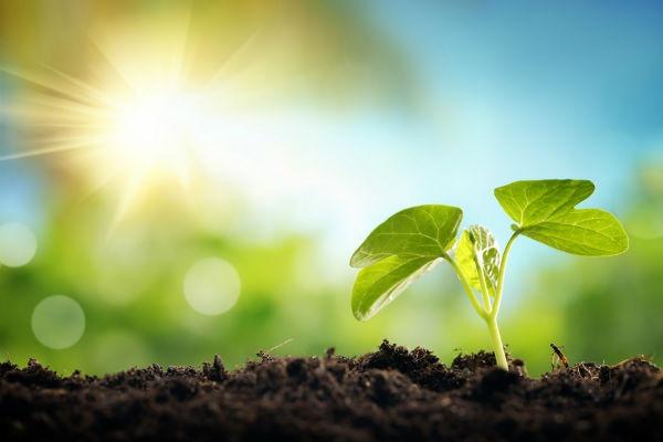 Las mejores aplicaciones para los amantes de las plantas