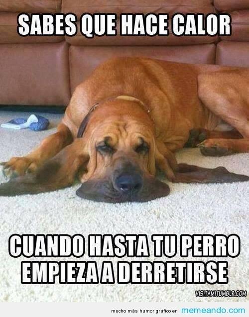 meme perros humor
