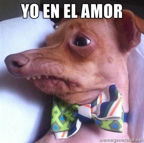 meme perro amor 8 los mejores memes de perros para compartir en los estados de