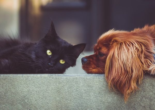 Wizapet, app de la Guardia Civil para localizar mascotas perdidas