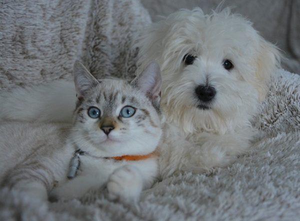 GIFs divertidos de perros y gatos para tus Estados de WhatsApp