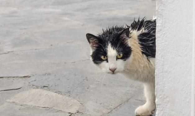 Los mejores memes de días de lluvia para enviar por WhatsApp