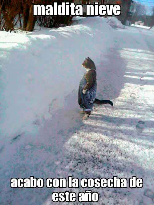gato nieve meme