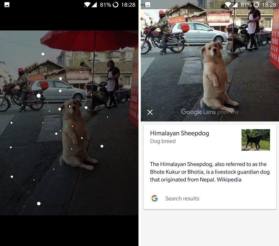 google lens perros
