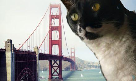 Convierte a tu mascota en un gigante con esta divertida app de fotos
