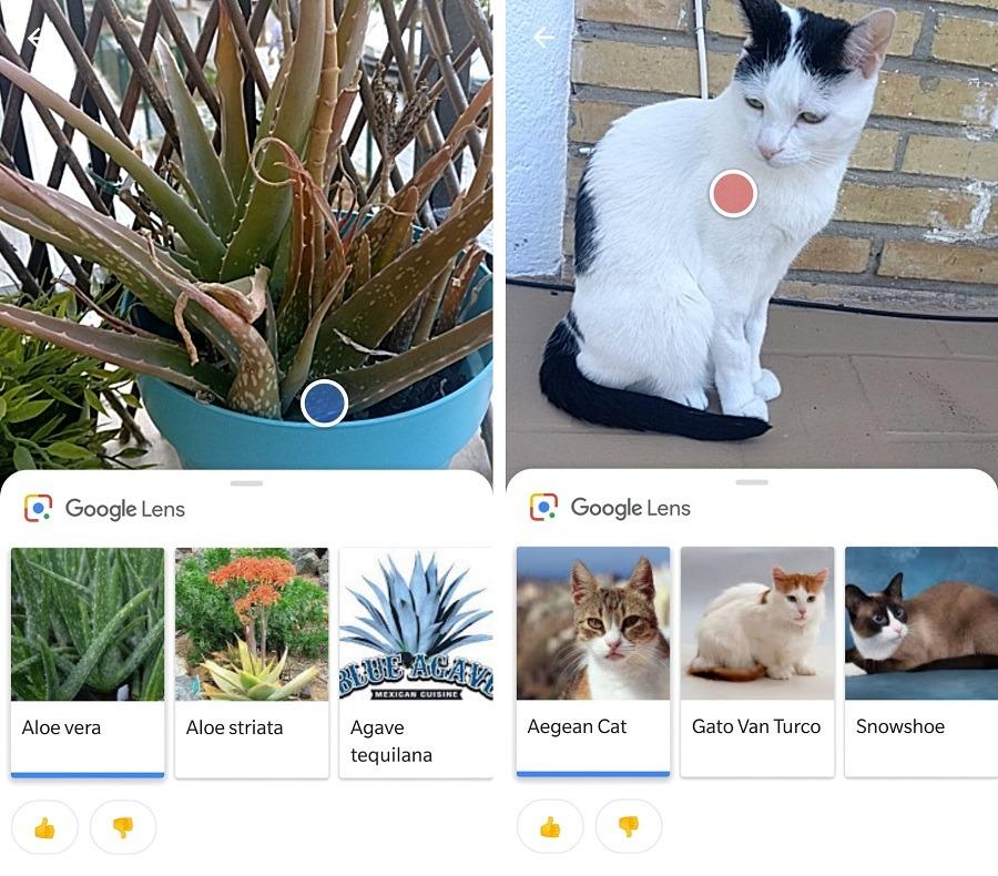 gatos y plantas google lens