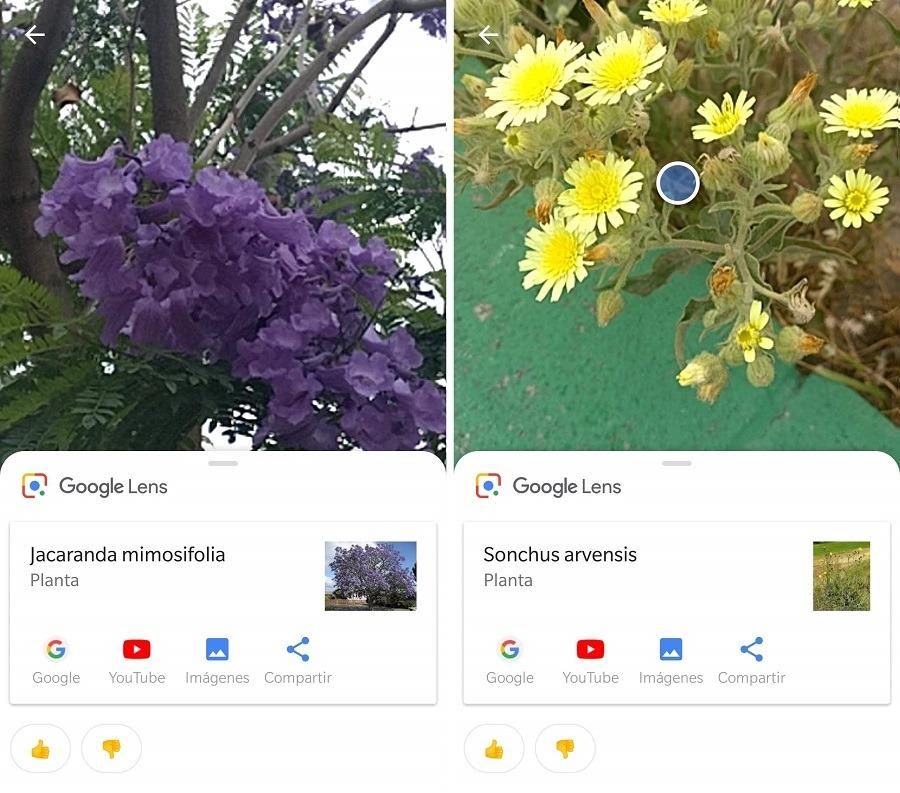 plantas google lens