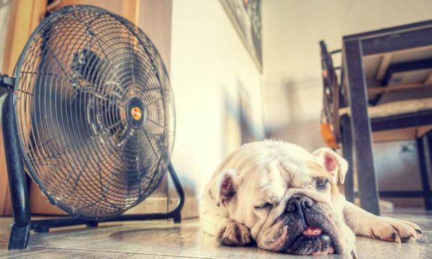 5 aplicaciones de ventilador para sobrevivir al calor del verano con tu móvil